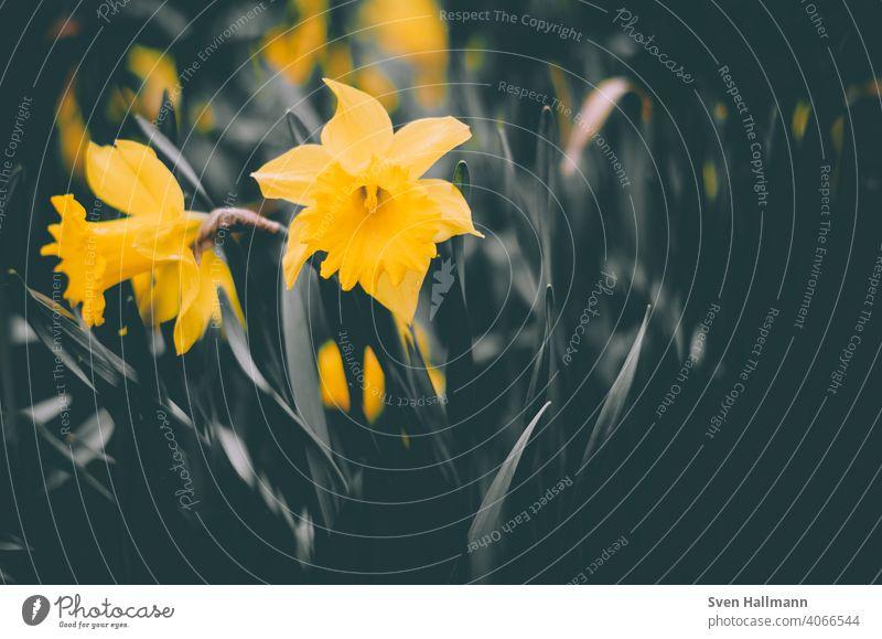gelbe Wildblume im Gräsermeer Blumen Wildblumen makro natur grün Natur Sommer natürlich Feld Blüte Wiese Garten Blumenwiese Wiesenblume blühen Gras Blühend
