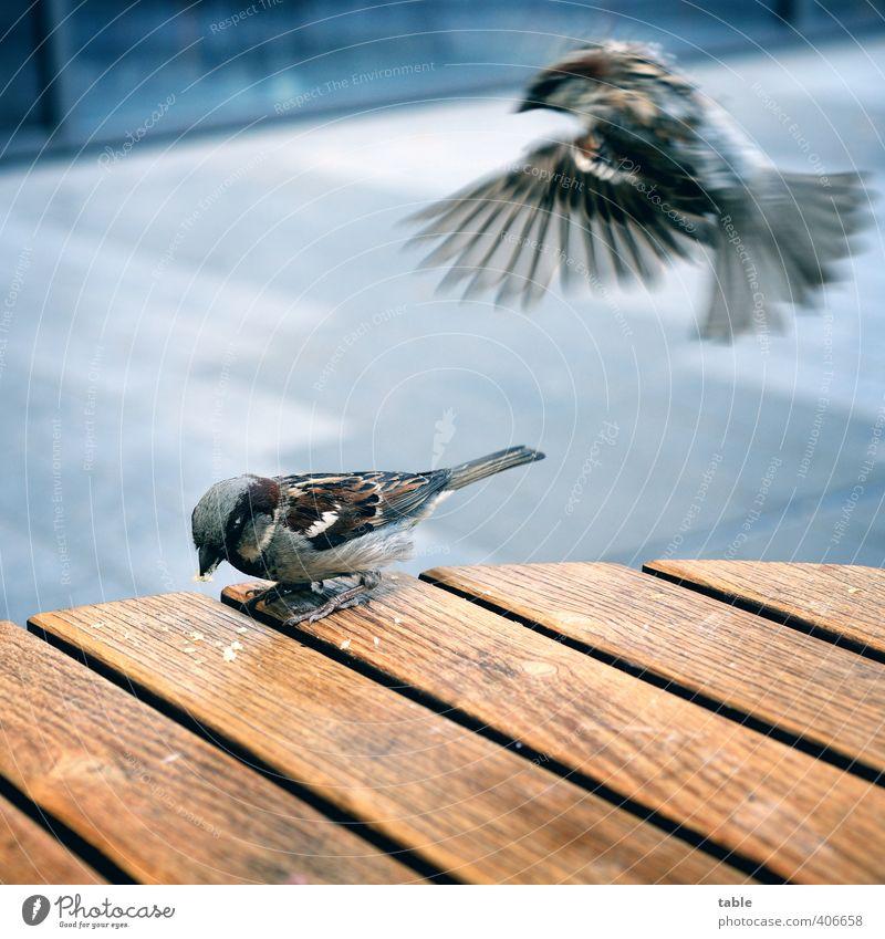 nichmal in Ruhe Kaffee trinken kann man... ;) Essen Gastronomie Tier Wildtier Vogel Flügel Krallen Spatz 2 Tierpaar Holz Linie Bewegung fliegen Fressen füttern