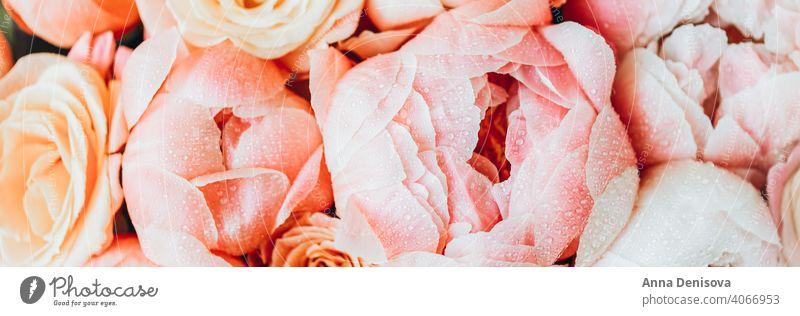 Frischer Strauß aus rosa Pfingstrosen und Rosen Pastell Roséwein Brühe Haufen Blume Blumenstrauß geblümt Blütenblätter Tapete Postkarte Frühling Liebe Sommer