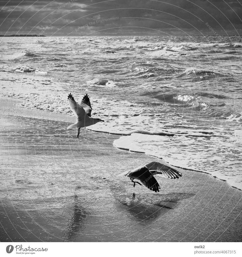 Ausflug Möwe Abheben Leichtigkeit fliegen Flügel Tag Textfreiraum oben Menschenleer Küste Wellen Ostsee Wind Schönes Wetter Klima Horizont Wolken Himmel Tier