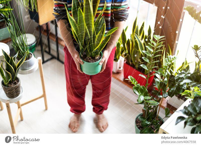 Mann hält Topfpflanze in Händen zu Hause Öko Floristik Pflege Gesundheit Flora botanisch wachsend frisch Blatt Wachstum organisch Natur Gärtner grün natürlich