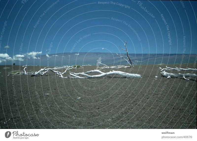 Desaster Himmel Holz Horizont Wüste trocken Ödland Hawaii