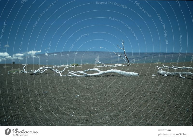 Desaster Holz Ödland Horizont Hawaii trocken Wüste Himmel wolfman wk@weshotu.com