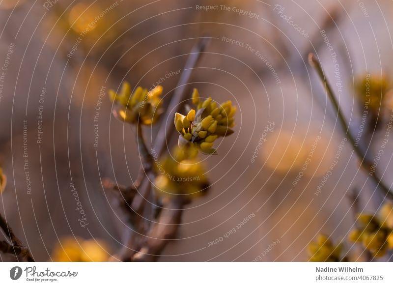 Der Frühling kommt Blume Natur grün Blüte Pflanze Blühend Farbfoto Außenaufnahme Makroaufnahme Nahaufnahme Detailaufnahme Garten Schwache Tiefenschärfe Tag