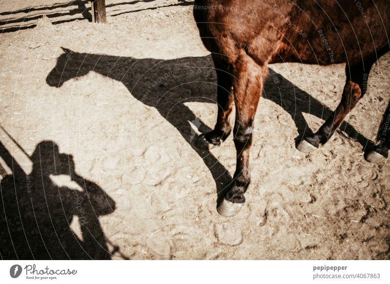 Ein Mann fotografiert seinen Schatten und den Schatten eines Pferdes Licht & Schatten Kontrast Strukturen & Formen Schattenspiel Schattenseite Schattendasein
