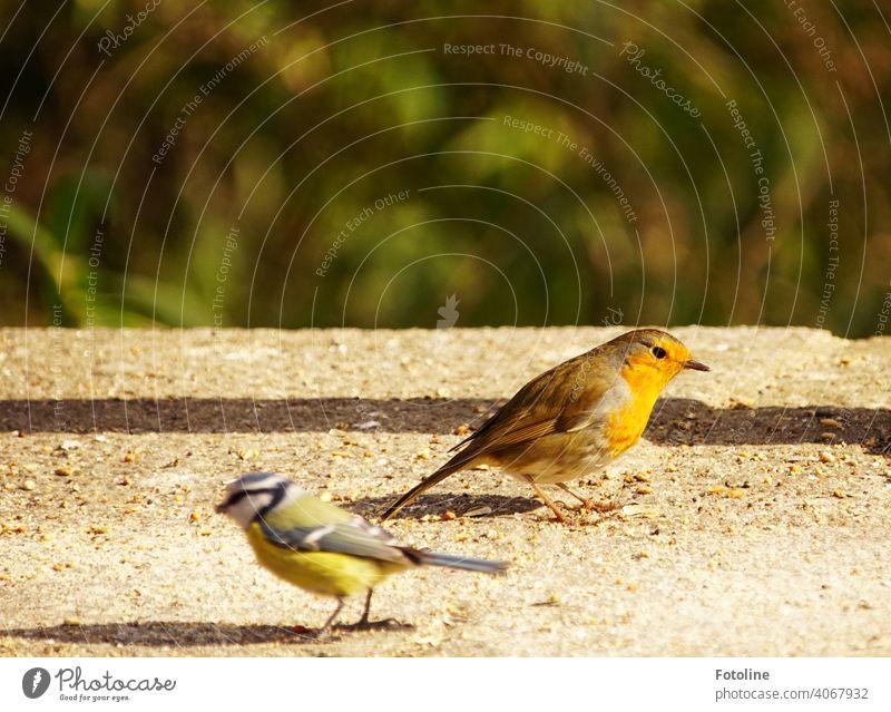 Buntes Stelldichein an der Futterstelle Natur Himmel Vogel Außenaufnahme Wildtier Farbfoto Tier Menschenleer Freiheit Umwelt frei Vögel natürlich Luft viele Tag