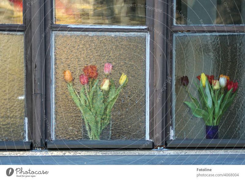 1900 Frühlingsblumen im Fenster Fensterglas Fensterscheibe Fensterkreuz Holz Glas Blumen Vase Blumenstrauß Tulpe Tulpenblüte tulpenstrauß Blüte Pflanze schön