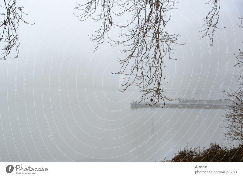 aussichtslos Nebel See Seeufer ruhig Morgenstimmung Ufer Einsamkeit neblig Morgennebel früh Melancholie geheimnisvoll mysteriös trüb Zweige winterlich