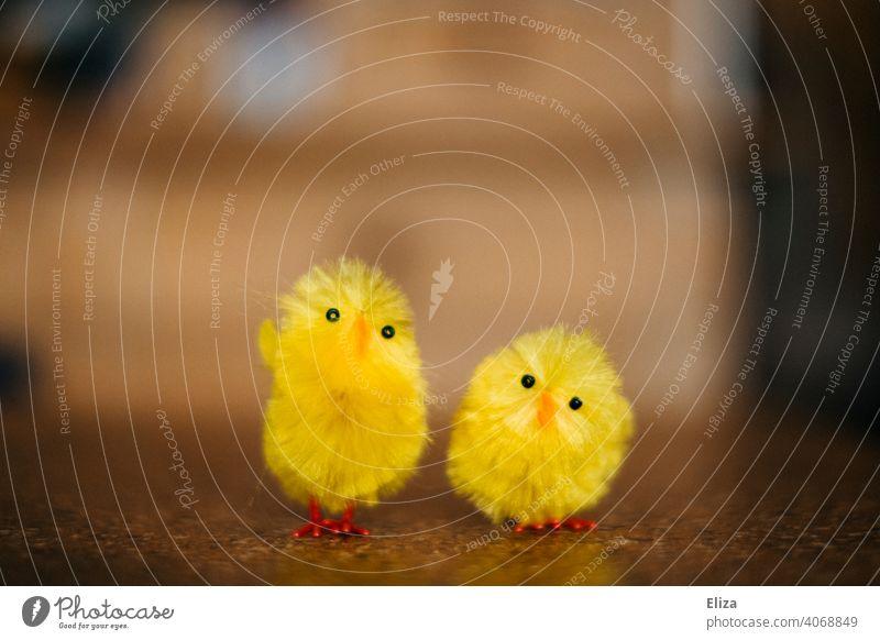 Zwei gelbe süße Küken. Osterdekoration. Ostern Tier niedlich