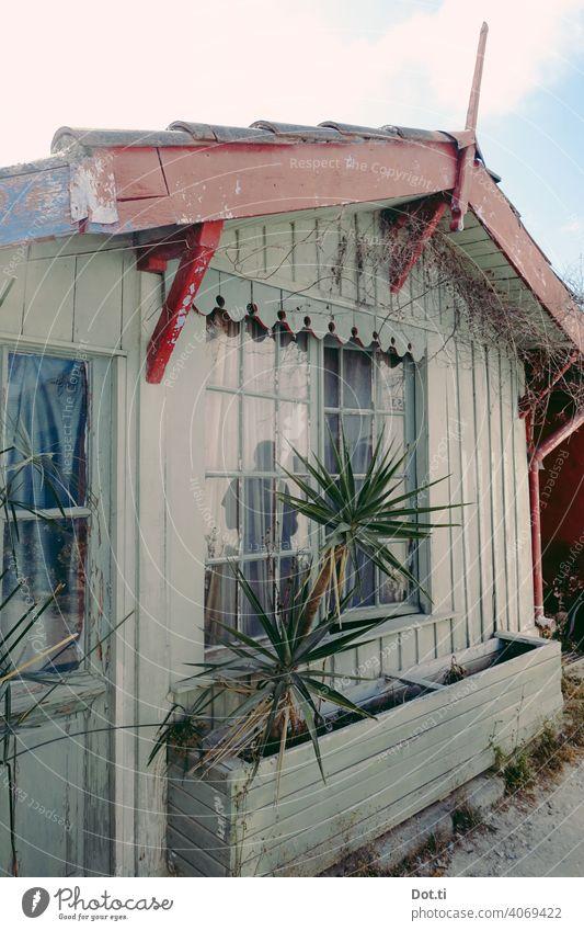 Fischerhütte Hütte Menschenleer Ferien & Urlaub & Reisen Holzhaus Palme Yucca Vintage verzierung Giebel Farbfoto Außenaufnahme