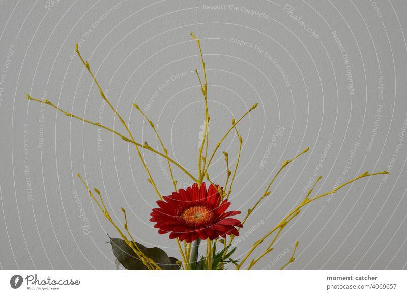 Rote Blume mit gelben Zweigen vor weißem Hintergrund Blumenstrauß rot Frühling Gerbera Blumenschmuck blumengesteck Geschenk blumengeschenk Muttertag Geburtstag