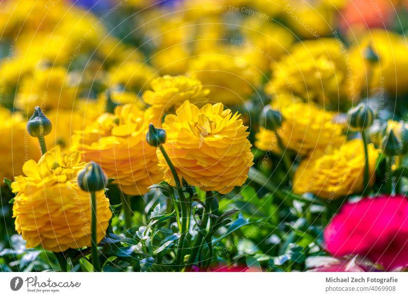 schöne bunte Blumen als Osterdekoration Dekoration & Verzierung Blumenstrauß Natur geblümt Blüte Schönheit Farbe Hintergrund Pflanze romantisch Frühling
