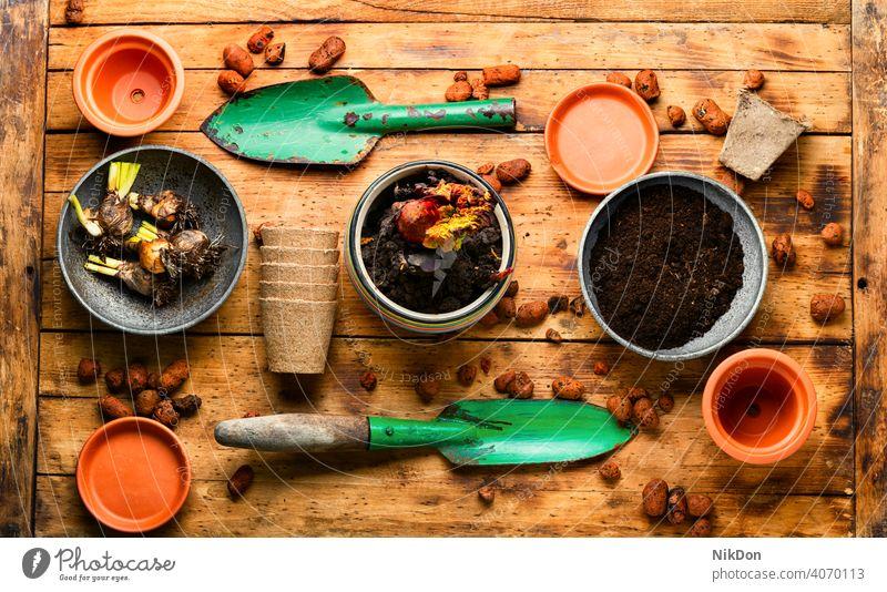 Gartenarbeit und Bepflanzung Pflanze Keimling Frühling Boden Samen Topf Ackerbau Schmutz Natur wachsend Werkzeug Saison Blume schaufeln Wachstum Tisch