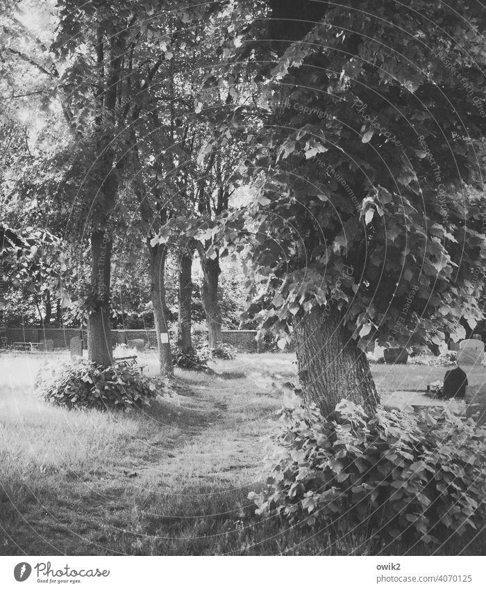 Halbwegs Landschaft Natur Umwelt Pflanze Zweige u. Äste Holz Schönes Wetter Baum Herbst Einsamkeit Idylle rein Detailaufnahme Menschenleer Schwarzweißfoto