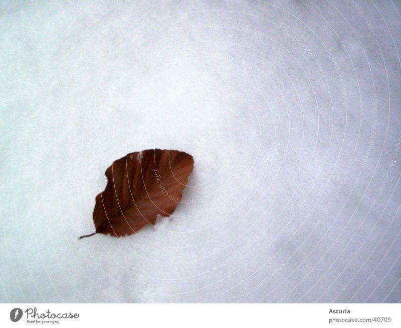 snow leaf Blatt Winter weiß kalt rein Schnee hell Schneedecke Vor hellem Hintergrund Freisteller Textfreiraum oben Textfreiraum rechts einzeln 1