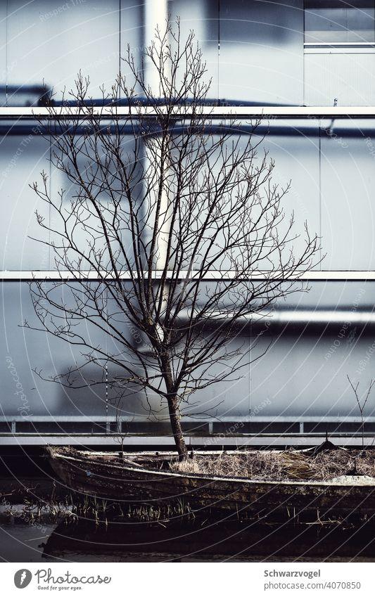 Baum wächst in einem Boot vor einer Fassade Ruderboot Winter Einsamkeit wachsen Leben Widerstandskraft widersetzen poetisch unwirtlich entfalten Chance