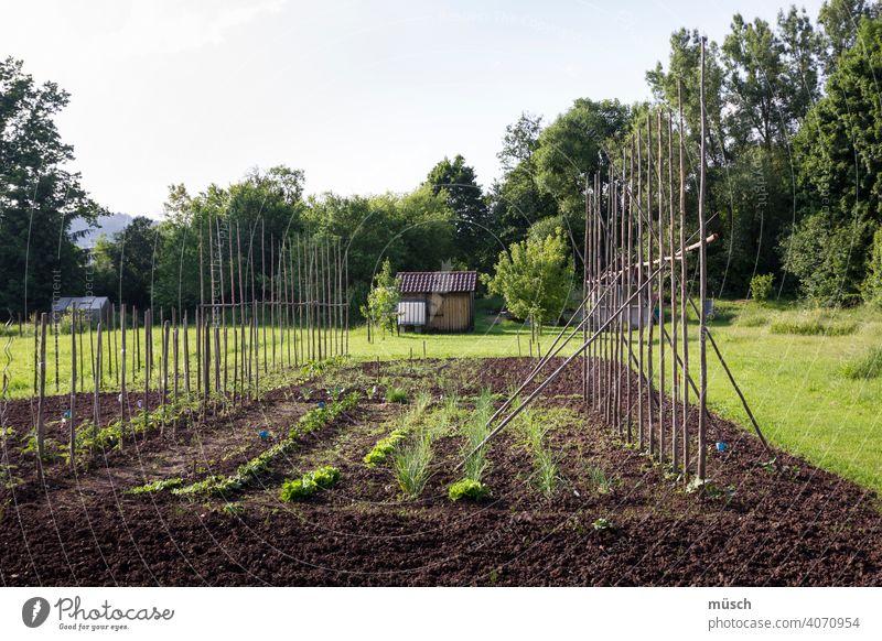 Meine kleine Farm Feld Acker Ertrag Natur Bio Schrebergarten Erde Anbau Arbeit Gemüse Bohnen Ernte Stangen Wengert Garten Landwirtschaft Haus Eigenes Gras Bäume