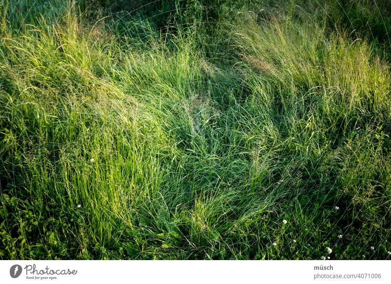 Wiese Gras Natur grün Spur Halme Tritt Verdacht Blümchen Klee Frage Landwirtschaft Umwelt