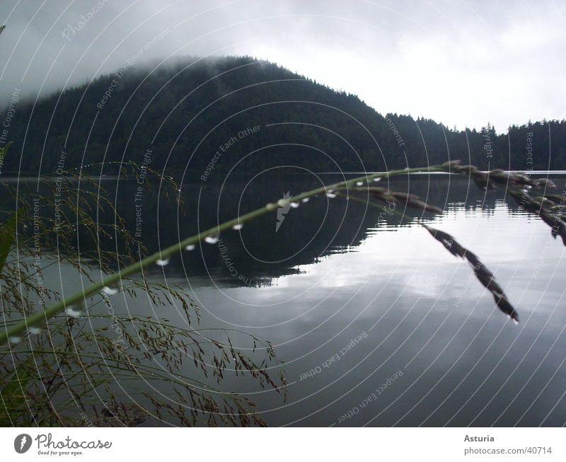 rain drops Wasser Wolken Einsamkeit dunkel Gras Berge u. Gebirge Traurigkeit See Regen Nebel Wassertropfen Trauer Halm