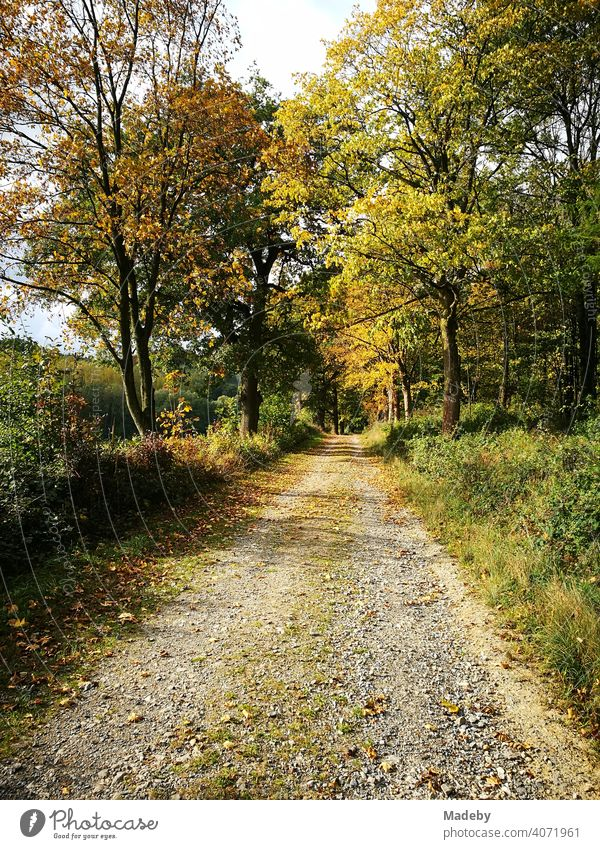 Feldweg für die Forstwirtschaft im Herbst bei Sonnenschein im Teutoburger Wald in Oerlinghausen bei Bielefeld am Hermannsweg in Ostwestfalen-Lippe Jahreszeit