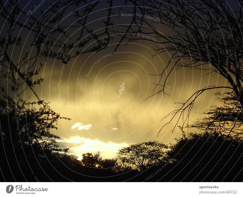 Wilde Wildnis dunkel Licht Wolken mystisch Abend Schatten