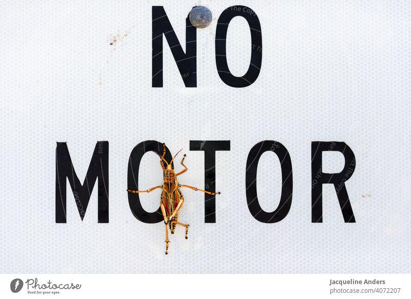 """Grashüpfer sitzt auf einem Schild """"kein Motor"""" insekt Tier Heuschrecke Natur Nahaufnahme Farbfoto Außenaufnahme lustig Schnappschuss kein motor Menschenleer"""