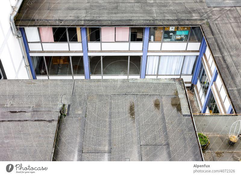 Büro des Winkeladvokaten Hinterhof hinterhofidyll Haus Fenster Stadt Wand Außenaufnahme Fassade Mauer Altbau Häusliches Leben innenhof Wohnhaus Mehrfamilienhaus