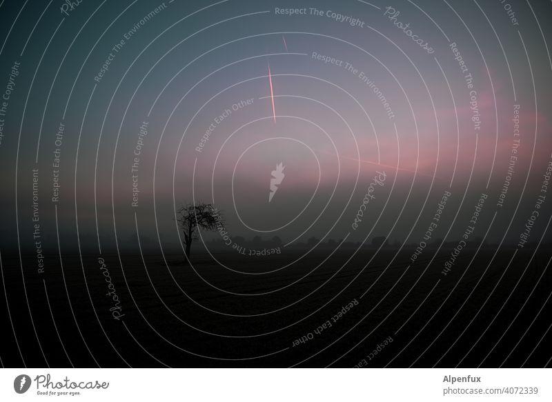 Illusion | eines neuen Tages Morgenrot Sonnenaufgang Himmel Morgendämmerung Farbfoto Außenaufnahme Sonnenuntergang Natur Menschenleer Landschaft Pflanze Baum
