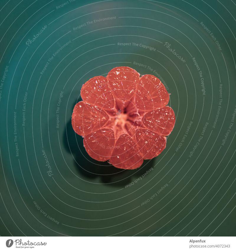 Agent Orange orange halbiert Muster Lebensmittel Frucht saftig Vegetarische Ernährung Farbfoto sauer Mandarine Bioprodukte Gesundheit Nahaufnahme Menschenleer