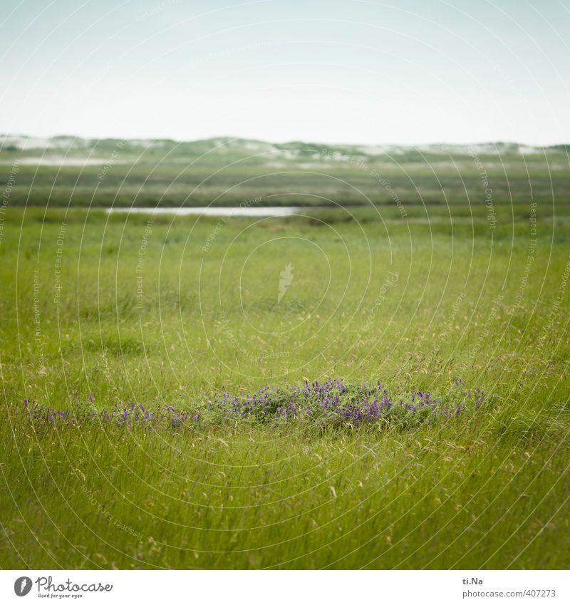 SPO | blühende Insel Natur grün weiß Sommer Blume Gras Küste grau natürlich wild authentisch Tourismus Wachstum Schönes Wetter Blühend violett