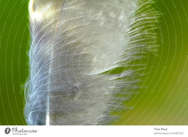 Feder zart leicht Dinge Wind Makroaufnahme Detailaufnahme