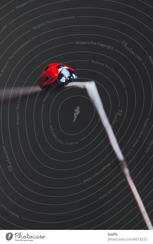 wohin der Weg auch führen mag Marienkäfer Glückskäfer Glücksbringer Glückssymbol Käfer ungewisse Zukunft roter Käfer unterwegs krabbeln Route Knick nach unten
