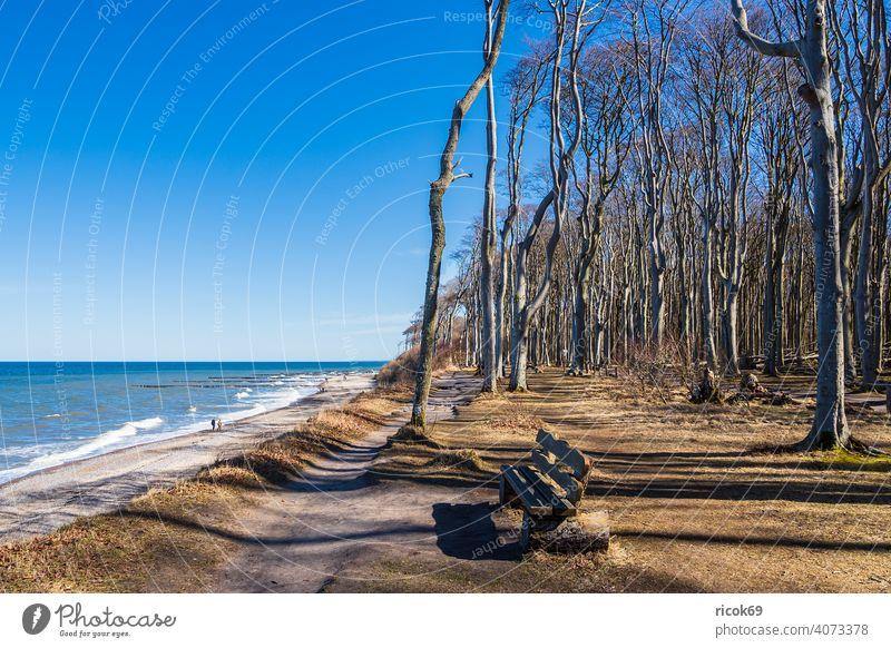 Gespensterwald an der Ostseeküste bei Nienhagen Küste Strand Wald Bäume Natur Landschaft Meer Wellen Urlaub Mecklenburg-Vorpommern Steilküste Bank Sitzbank
