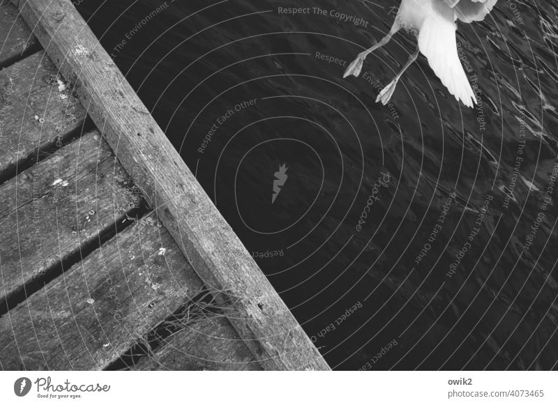 Weltall, ich komme Möwe Abheben Leichtigkeit fliegen Ostsee Wellen Küste Tier Freiheit Ausflug Außenaufnahme Schwarzweißfoto elegant Wasser Vogel Urelemente