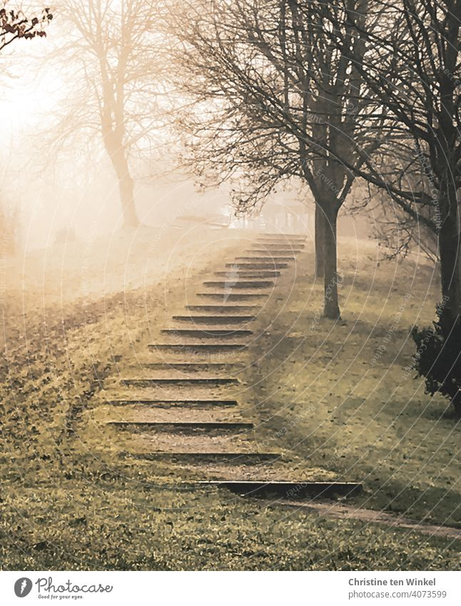 Morgenstimmung mit diffusem Sonnenlicht ... Ein befestigter Gehweg führt zwischen den Bäumen entlang auf einen Hügel nebelig Herbststimmung Weg Ausflug Natur