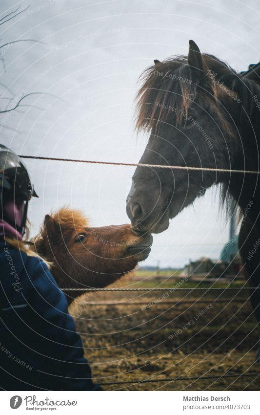 Pferdekuss Tier Himmel Außenaufnahme Natur Landschaft Farbfoto Liebe Pony Ferien & Urlaub & Reisen Island horse