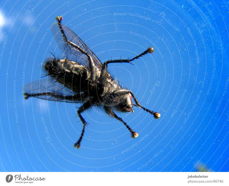 auf der Winschutzscheibe Windschutzscheibe Wolken Froschperspektive Fliege Himmel Makroaufnahme Detailaufnahme