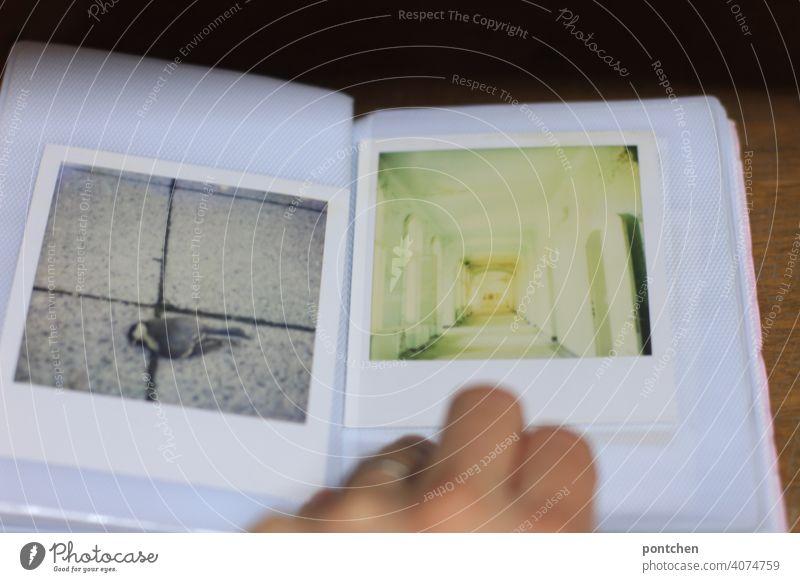 blättern in einem fotoalbum- polaroidfotografien. toter vogel lost place-vergänglichkeit fotos hand Erinnerung analog Nostalgie Gefühle bewahren