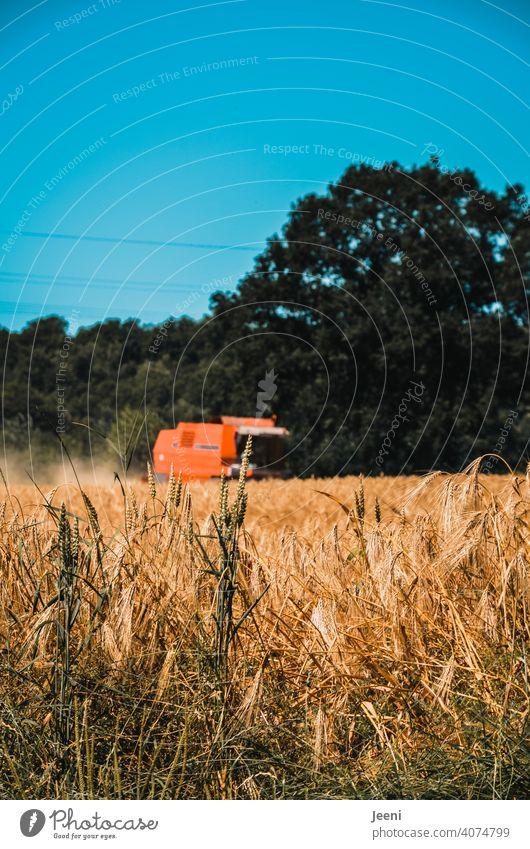 Ein Landwirt erntet im Sommer das Getreide Feld Ähren Ernte ernten Landwirtschaft Getreidefeld Korn landwirtschaftlich Landwirte Kornfeld Ackerbau Ernährung