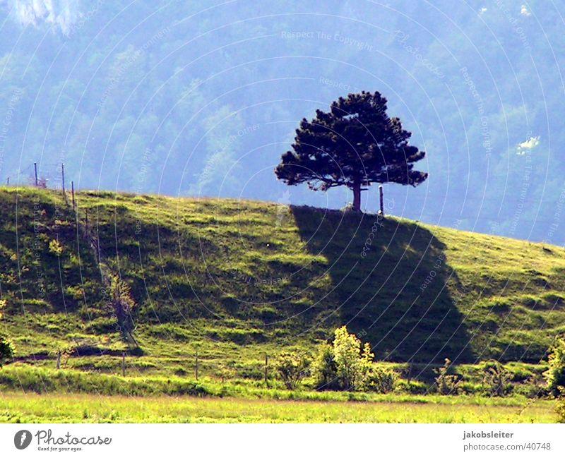 die Schatten werden länger Baum Wiese Berge u. Gebirge Abendsonne
