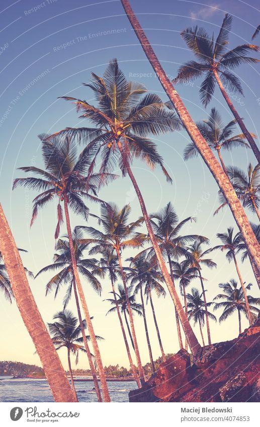 Kokosnusspalmen an der Küste von Sri Lanka, farbig getöntes Bild. Handfläche Baum Strand MEER tropisch Paradies Himmel exotisch Urlaub Feiertage Natur