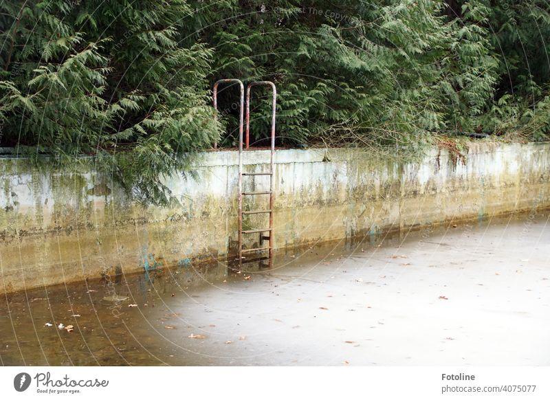 Lost - Altes verwildertes Freibad irgendwo im Nirgendwo. Lost Place lost place verlassen alt Verfall Vergangenheit Vergänglichkeit lost places verfallen