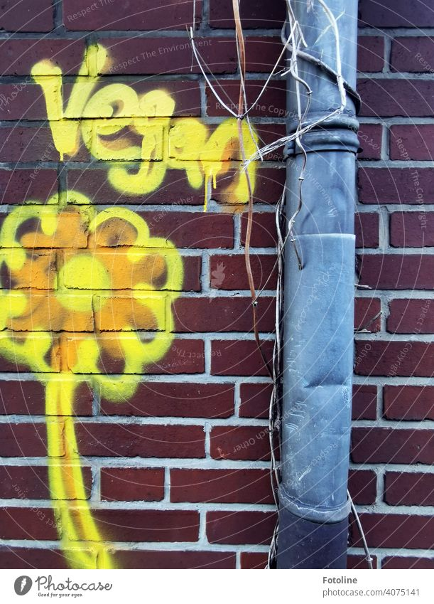 """Der Schriftzug """"Vegan"""" und eine gelbe Blume wurden auf eine Backsteinmauer  neben einer zerbeulten Regenrinne gesprayt. vegan Ernährung Vegane Ernährung"""