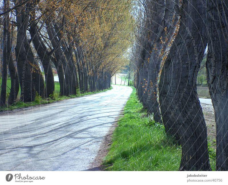 Allee beim Morgensport Frühling Bundesland Burgenland Ausflug Morgendämmerung alte Straße