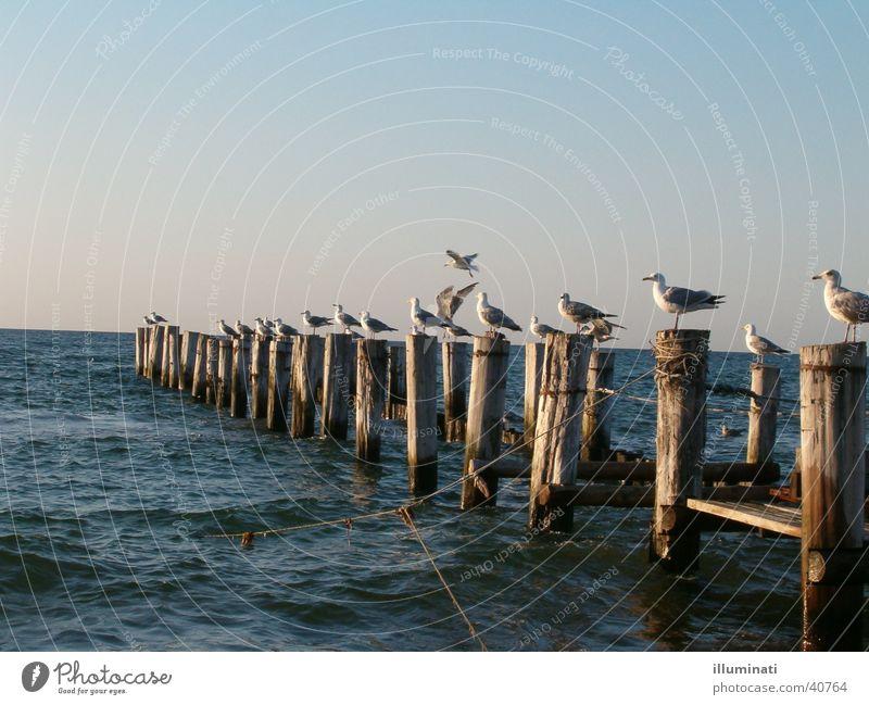 möwensteg Wasser Meer Vogel Steg Ostsee Möwe