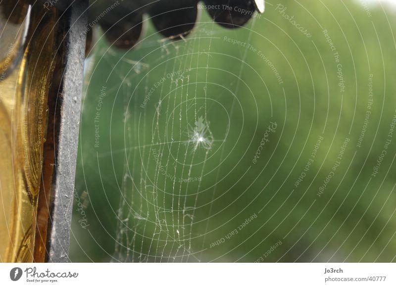 Spider I Spinnennetz Lampe Unschärfe Tiefenschärfe grüner Hintergrund Netz Natur