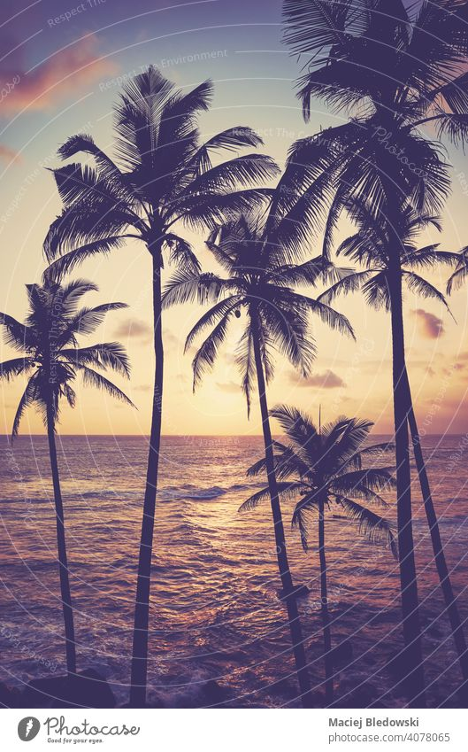Kokosnusspalmen-Silhouetten bei Sonnenuntergang, Farbtonung angewendet, Sri Lanka. tropisch Strand Handfläche Sonnenaufgang friedlich Flucht Wasser Insel