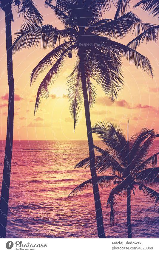 Kokosnusspalmen-Silhouetten bei Sonnenuntergang, Farbabtönung angewendet. tropisch Strand Handfläche friedlich Flucht Wasser Insel Paradies Natur Meer reisen