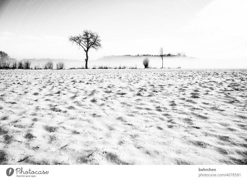 schneewüste Baumstamm Äste und Zweige mystisch Klima traumhaft träumen Schwarzweißfoto Nebel geheimnisvoll Märchenwald schön verträumt idyllisch Schneedecke