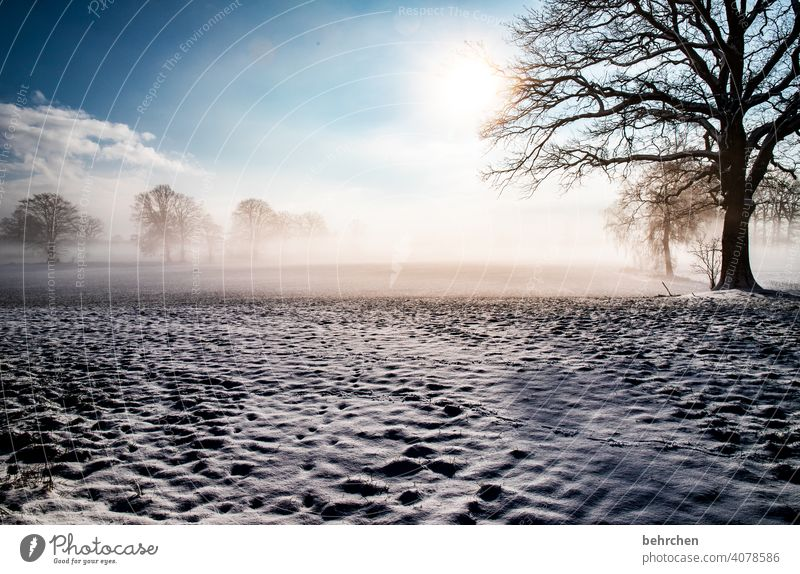 wintertraum Sonnenlicht Schneefall weiß ruhig Umwelt Natur Wiese Frost Landschaft Himmel Winter Wald Feld Bäume Wetter stille Winterlandschaft Idylle kalt